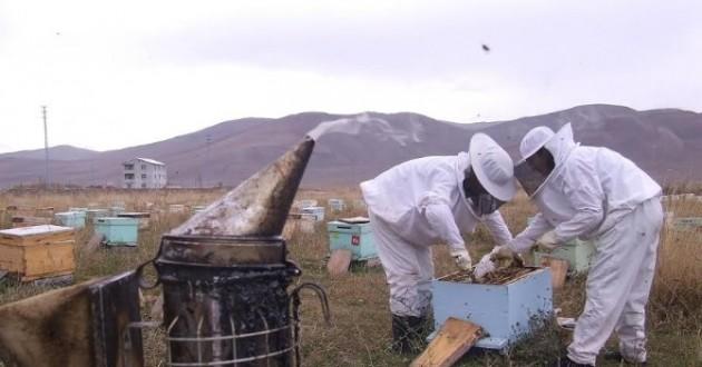 Ardahan'da Kovan Ve Arı Hırsızlıklarına Arıcılardan Tepki