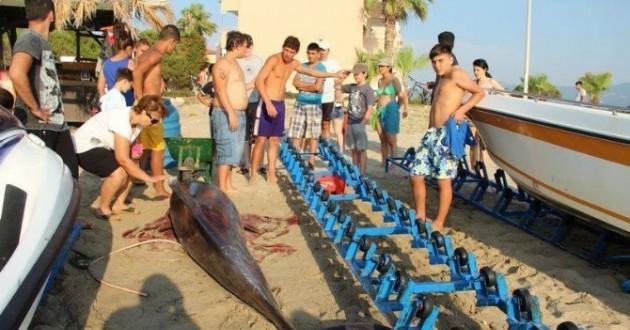 Kuşadası Sahiline Ölü Yunus Vurdu