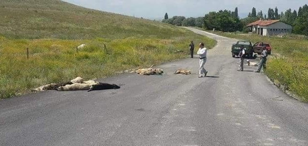 Kütahya'da Köpek Katliamı