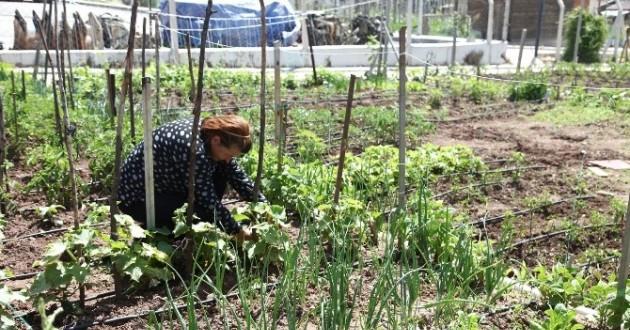 Organik İftariyelikler Hobi Bahçelerinden