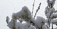 Baharın Müjdecisi Çiçekler Kar Altında Kaldı