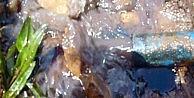 Batmanlı Çiftçi Tarlasında Su Ararken Petrol Buldu