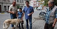 Bayramiç'te Köpeklere Kuduz Aşısı