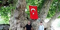 Bu Ağaç Osmanlı İmparatorluğundan Daha Yaşlı
