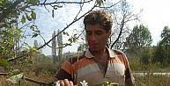 Çanakkale'de Erik Ve Kirazlar Sonbaharda Çiçek Açtı