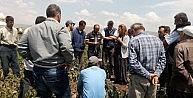 CHPli Vekil, Şalvarını Giyip Patates Üreticilerini Ziyaret Etti