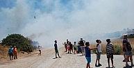 Didim'deki Yangında 80 Dekar Arazi Zarar Gördü