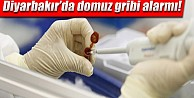 Diyarbakır'da Domuz Gribi Alarmı