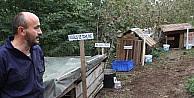 Giresunlu Hayvanseverden Sokak Köpeklerine Şifa Merkezi