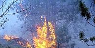 Kastamonuda 5 Hektarlık Ormanlık Alan Yandı