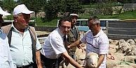 Kastamonu'da Merinos Irkı Damızlık Koç Dağıtımı Yapıldı