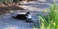Kedi Ve Kaplumbağanın Şaşırtan Dostluğu