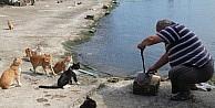 Kedilerin Umudu Balıkçılar