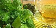 Mevsimsel Depresyonlara Melisa Çayıyla Son Verin