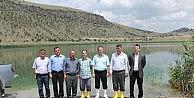 Niğde'de 5 Gölete 59 Bin 500 Yavru Sazan Balığı Bırakıldı