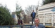 Ödemiş, Türkiyedeki Fidan Üretiminin Yarısını Karşılıyor