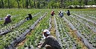 Orduda Organik Tarım Tuttu
