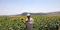 Yağlı Tohum Ve Türevlerinin İthalatına 1 Yılda 4 Milyar 286 Milyon TL
