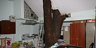 Zabıta Binası İçerisinde 30 Metrelik Ağaç